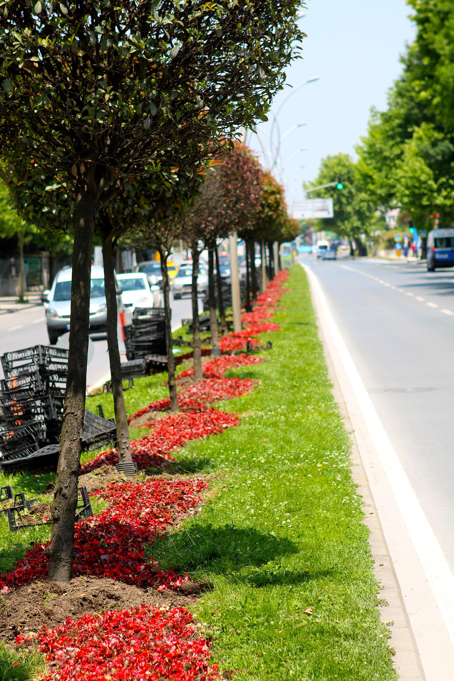 Şehir çiçek açıyor